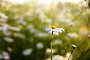 flowers-634739_640.jpgのサムネイル画像